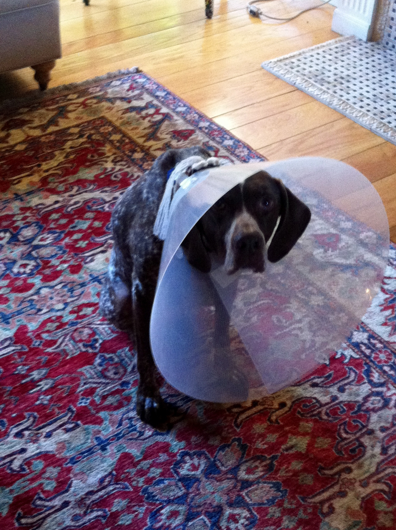 how to make a dog cone for head